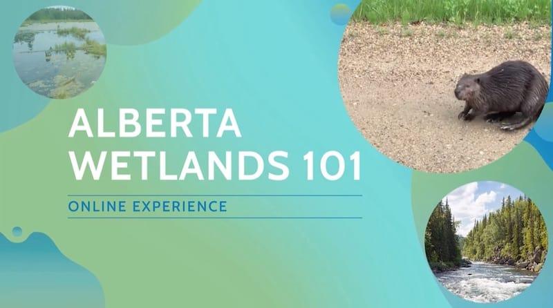 Screenshot of Wetlands 101 course